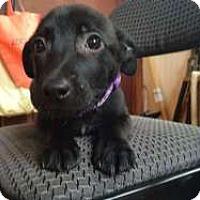 Adopt A Pet :: Cindy - Sudbury, MA