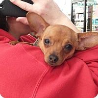 Adopt A Pet :: Cali - LaGrange, OH