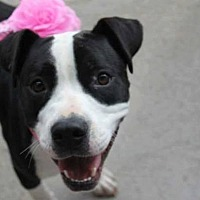 Adopt A Pet :: Maxine - Lexington, KY