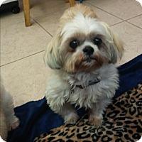 Adopt A Pet :: Tasha - Boca Raton, FL