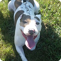 Adopt A Pet :: Tater - Williamsburg, VA