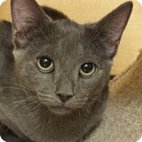 Adopt A Pet :: Grady - Mesa, AZ