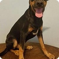 Adopt A Pet :: Bobbie - Detroit, MI