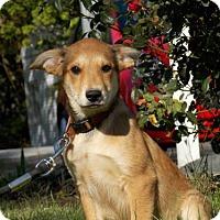 Adopt A Pet :: Rainy - Batavia, OH