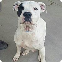 Adopt A Pet :: Cassie - CASCADE, WI
