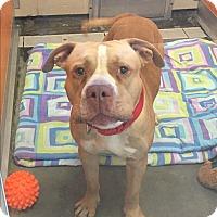 Adopt A Pet :: McGregor - Wilmington, DE