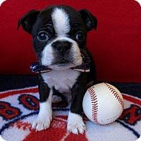 Adopt A Pet :: Southie - Irvine, CA