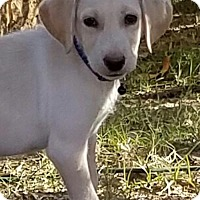 Adopt A Pet :: Dozer - Fort Worth, TX