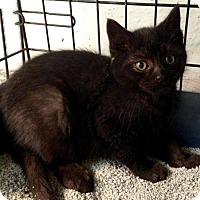 Adopt A Pet :: Jerry - River Edge, NJ