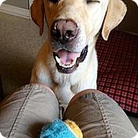 Adopt A Pet :: Hank - Richmond, VA