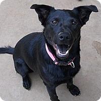 Adopt A Pet :: Jada - dewey, AZ