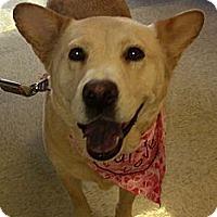 Adopt A Pet :: Konju - Scottsdale, AZ