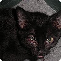 Adopt A Pet :: Raina - Warren, MI