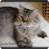 Adopt A Pet :: Gretchen - Beverly Hills, CA
