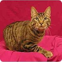 Adopt A Pet :: Lewis - Sacramento, CA