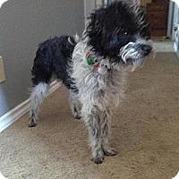 Adopt A Pet :: Mac - Saskatoon, SK