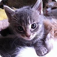 Adopt A Pet :: Katy - St. Louis, MO