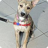 Adopt A Pet :: Bonnie - New York, NY