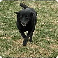 Adopt A Pet :: Delia - Meridian, ID