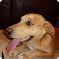 Adopt A Pet :: Barker - Warrenton, NC