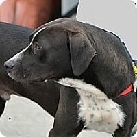 Adopt A Pet :: Chubbs - Marietta, GA