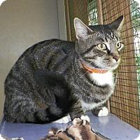 Adopt A Pet :: Tonka - Dover, OH