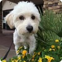 Adopt A Pet :: Fred - Las Vegas, NV
