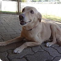 Adopt A Pet :: Sydney - Bedford, TX