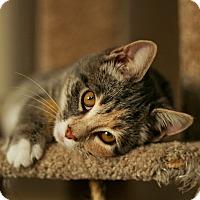 Adopt A Pet :: Saffron - Stafford, VA