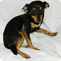 Adopt A Pet :: Lucy Lu - Umatilla, FL