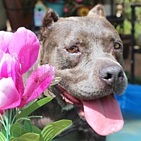 Adopt A Pet :: Naomi - Toluca Lake, CA