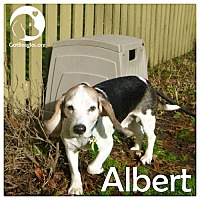 Adopt A Pet :: Albert - Chicago, IL