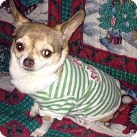 Adopt A Pet :: MOJO - DeLand, FL