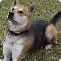 Adopt A Pet :: Hobart - Mt. Airy, MD