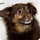 Adopt A Pet :: Macro