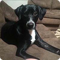 Adopt A Pet :: A326224 Suzie - San Antonio, TX