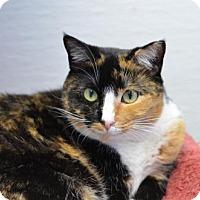 Adopt A Pet :: Lola Falana 150359 - Atlanta, GA