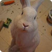 Adopt A Pet :: Thurston - Woburn, MA