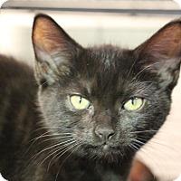 Adopt A Pet :: Kelly Kapoor - Sarasota, FL