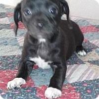 Adopt A Pet :: Myla - Gilbert, AZ