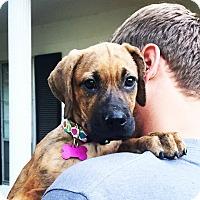 Adopt A Pet :: Abby - Memphis, TN