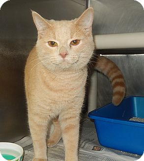 Domestic Shorthair Cat for adoption in Newport, North Carolina - Nicholas and Alexander