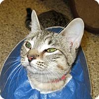 Adopt A Pet :: Tonky - Georgetown, TX