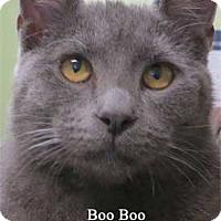 Adopt A Pet :: Boo Boo - Warren, PA