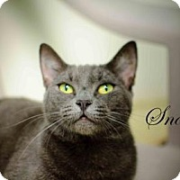 Adopt A Pet :: Snookie - Middleburg, FL