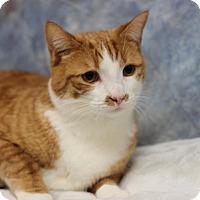 Adopt A Pet :: Taric - Midland, MI