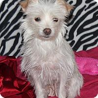 Adopt A Pet :: Harley - Ridgecrest, CA