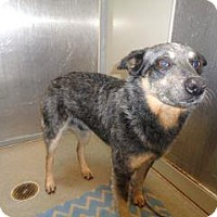 Adopt A Pet :: Henry - Wildomar, CA
