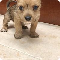 Adopt A Pet :: Darwin - Weston, FL