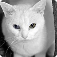 Adopt A Pet :: Gardenia170054 - Atlanta, GA